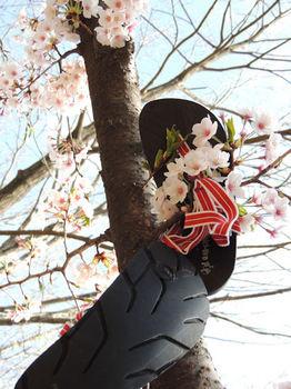 ワラーチ 桜.jpg