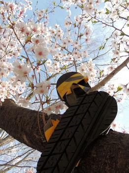 桜とアルクタイヤ.jpg